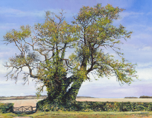 Ash Tree, Shepherds Down  - painting by Jerry Smith